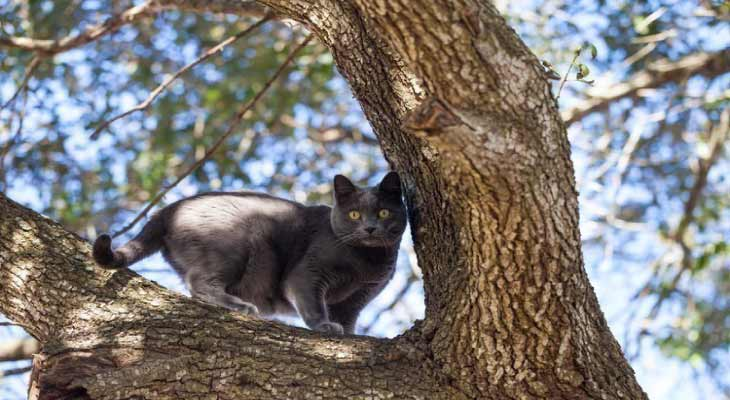 How to Get a Cat Out of the Tree
